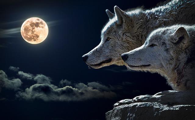 wolf-547203_640